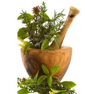 China Gastrodia elata plant roots/ Rhizoma Gastrodiae factory