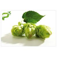 Buy cheap Flower Powdered Herbal Extracts Broad Spectrum Beer Hops Xanthohumol 98% CAS 6754 58 1 from Wholesalers