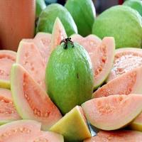 China fruit powder pure Guava Fruit Powder on sale