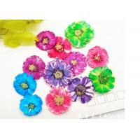 Buy cheap Small Daisy Natural Real Pressed Flowers True Plants Specimens For DIY Photo Frame from Wholesalers