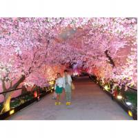 Artificial Pink Cherry Trees