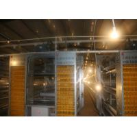 China A  H Type Layer Chicken Cage System High Rearing Efficiency 15-20 Years Lifespan factory