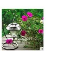 China Solar Garden Lights on sale