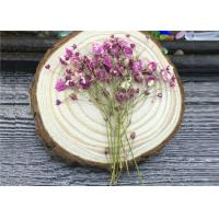 Buy cheap DIY Handmade Long Dried Flowers , Babys Breath Materials Real Dried Flowers from Wholesalers