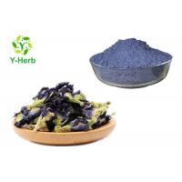 China Dried Juice Tea Herbal Extract Powder Blue Butterfly Pea Flower Powder Food Pigment on sale