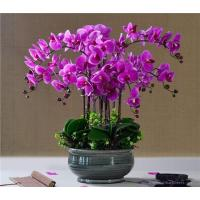 Wholesale Potted PU Orchids