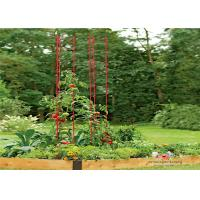 Buy cheap Metal Garden Tomato Plant Stakes  Pack size  L73 Pack size  h 36 Tall or Towering, You Need Our Ladder Trellis from Wholesalers