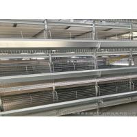 China Hot Galvanized Automatic Egg Collection System Strong Frame 3 Years Guarantee factory