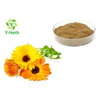 Quality Calendula Officinalis Extract Natural Cosmetic Ingredients Pot Marigold Flower Powder for sale