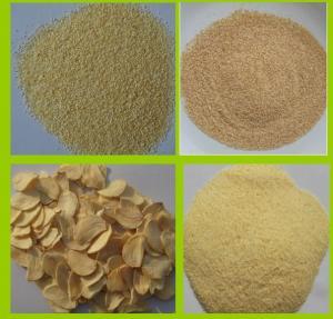 China DRY GARLIC GRANULES /DEHYDRATED GARLIC GRANULES/GARLIC CHOPPED factory