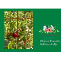 Buy cheap Powder Coated Steel Tomato Plant Stakes / Support For Tomato Plants from Wholesalers