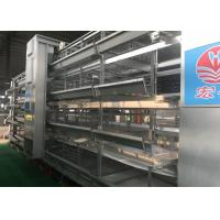 China Stable Automatic Manure Removal System Full Chicken Breeding For Layers factory