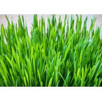 Buy cheap Anti Disease Premium Health Supplements Micronized Wheatgrass Extract Powder from Wholesalers