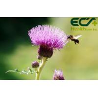 Buy cheap Detoxification Pure Milk Thistle Extract Powder Herbal Nutritional Supplements from Wholesalers