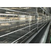 China High Efficiency Automatic Chicken Waterer System / Broiler Automatic Drinker factory