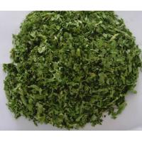 China DRIED PARSLEY LEAVES 10X10MM factory