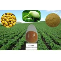 China Natural Soy Isoflavones Extract Good For Men's and Women's Health --Glycine max (L.) Merri on sale
