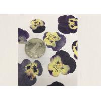 Buy cheap Purple Pansy Real Pressed Flowers True Plant Material For Press Picture Ornaments from Wholesalers