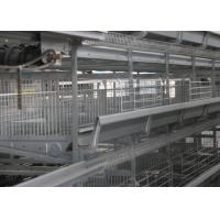 China High Capacity Chick Rearing Equipment U - Shaped Steel Manage Easily factory
