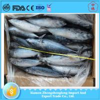 China Best Quality of Cheap Frozen Seafoood Whole Round Bonito Fish for Sale. factory
