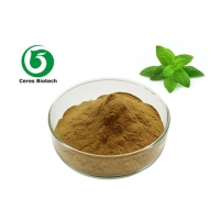 China Mentha Piperita Extract 100% Wild Mint Herbal Extract Powder factory