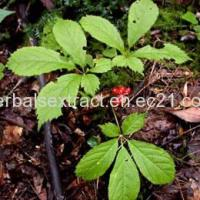 Buy cheap American Ginseng Extract,Panax Quinquefolius from Wholesalers
