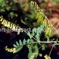 Buy cheap Astragalus Root Extract,Astragalus Membranaceus Bge from Wholesalers