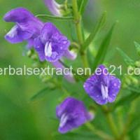 Buy cheap Baikal Skullcap Extract,Scutellaria Baicalensis Georgi from Wholesalers