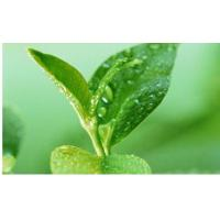Buy cheap Green Tea Polyphenols from Wholesalers