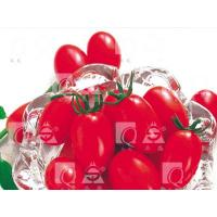 Buy cheap REDROSE,TOMATO Tomato from Wholesalers
