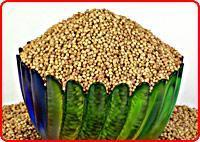 Buy cheap Coriander Seeds from Wholesalers
