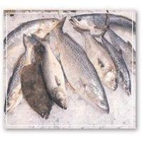 Buy cheap Fresh Seafood from Wholesalers