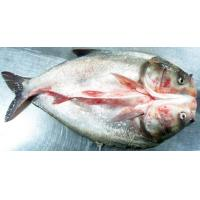 Buy cheap Sliver Carp from Wholesalers
