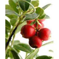 Buy cheap CAMU CAMU from Wholesalers