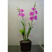 Buy cheap CLAY FLOWERS Dendrobium Sw- L from Wholesalers