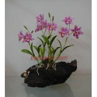 Buy cheap CLAY FLOWERS ORCHID(Elizabeth L ) from Wholesalers