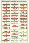 China Fish Posters& Prints on sale