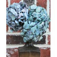 Buy cheap Dried Hydrangea Flower Bunch - Blue Color from Wholesalers