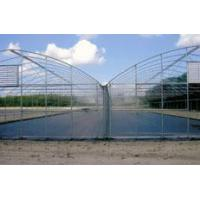 Quality Gutter Connected Greenhouses wholesale