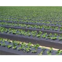 Buy cheap Gray PE Agriculture Mulch Film from Wholesalers