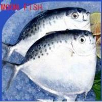 Quality Sea Caught Food Moonfish to Supply wholesale