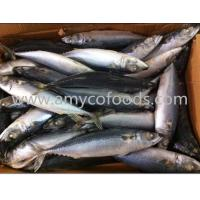 Buy cheap Pacific mackerel WR from Wholesalers