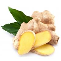 Buy cheap Natural Essential Oil 【Product Name】Ginger Essential Oil from Wholesalers