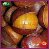 Buy cheap Sell Natural Frozen Roasted Ringent Chestnut with Shell from Wholesalers