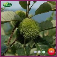 Buy cheap 2015 New Crop Chinese Fresh Best Sale Health Chestnut from Wholesalers