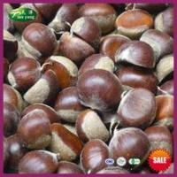Buy cheap 2015 New Crop Sweet Fresh Chinese Big Chestnuts from Wholesalers