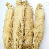 Buy cheap Natural Panax Ginseng Root Extract from Wholesalers