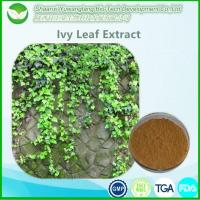 China Ivy Leaf Extract factory