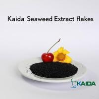 Natural Super Quality Sea Kelp Source Dried Seaweed Extract Products