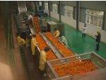 Buy cheap Orange Juice Concentrate Processing Line from wholesalers